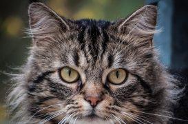 1,5 Yşın da kısırlaştırılmış dişi kedimiz Köpük